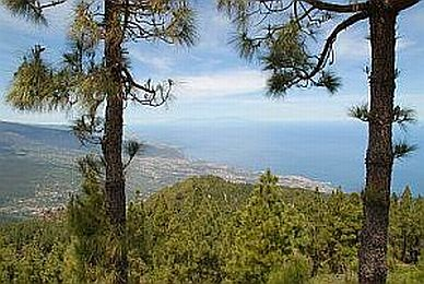 farmsteads-houses-spread-panorama-below-tenerife-pine-forest