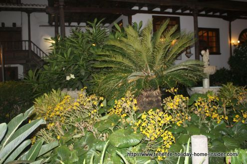 Abaco flowers and more surprises