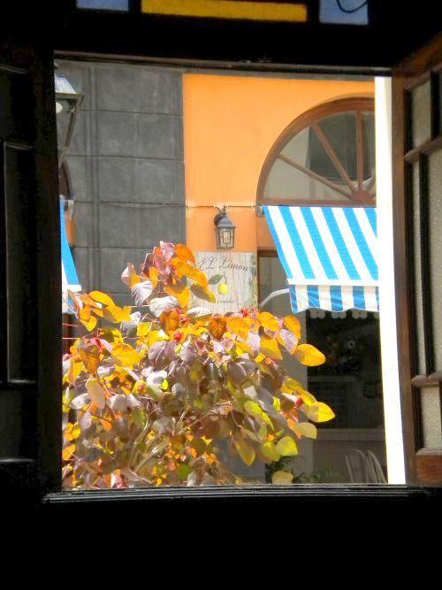 Backstreet window of enchanting Cafe Ebano.
