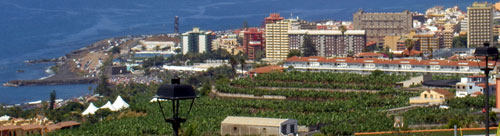Urban banana plantations within Puerto de la Cruz