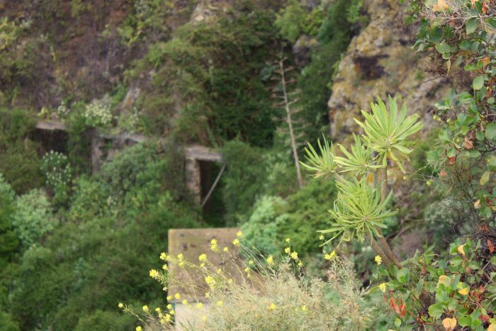 Barranco El Pino an Orotava Valley gorge, popular with alpinists by the Humboldt memorial Lookout.
