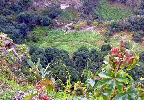 Barranco Ruiz gorge a protected space Nature reserve of Tenerife Spain.