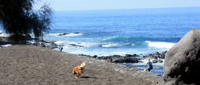 Beach San Felipe of Tenerife with wild chicken.