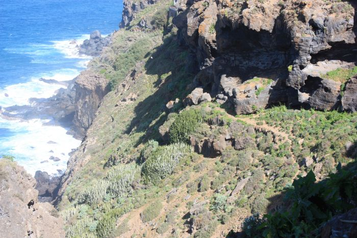 Bird habitat on track Romantica-1-Romantica-2 of the Rambla.
