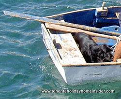Black cocker spaniel in a boat el Medano Tenerife