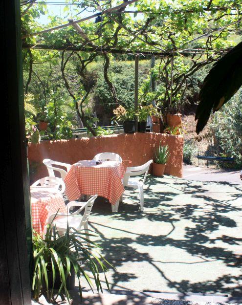 Bodega under grape-vines.