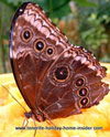 butterfly of Tenerife timber house garden
