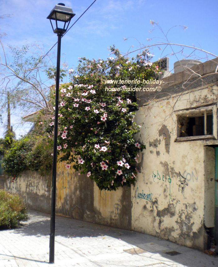 Casa San Fernando ruin