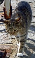 Punta Brava cat for rat free environment