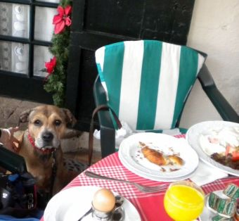 Our dog Jesse at our champagne breakfast on one of former Christmas days at the Monasterio.