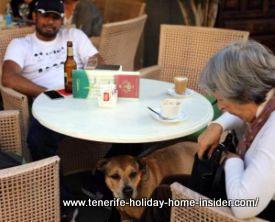 Dog friendly vacation bar Puero de la Cruz