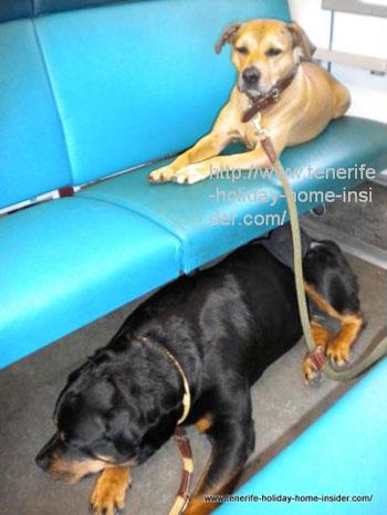 dogs in Dutch train