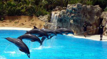 Dolphin stunts over rope at Loro Park