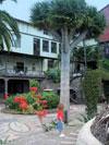 Drago tree La Orotava Casa Lercaro