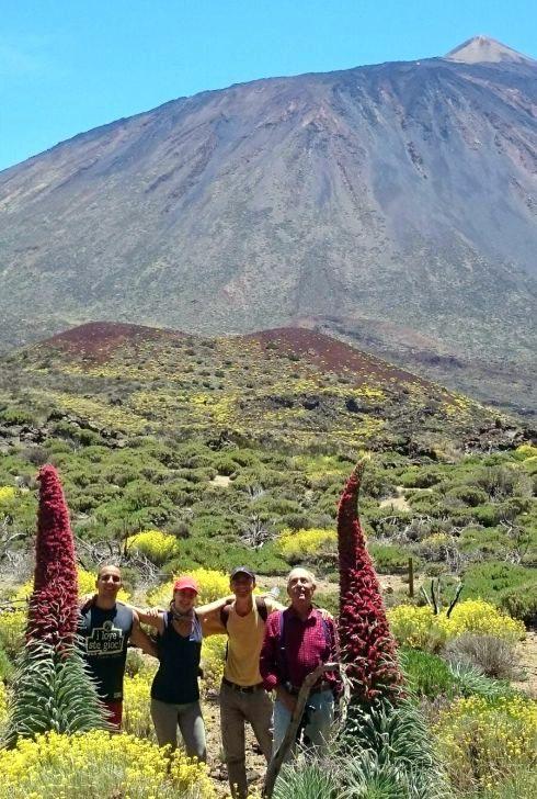 Echium Wildpretii with walkers next to it in the Cañadas and Mount Teide behind.