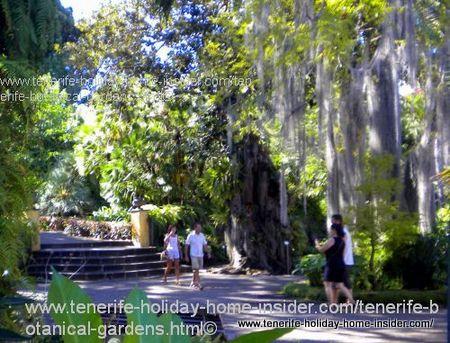 El Jardin Botanico Tenerife botanical gardens