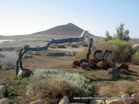 Endemic Tenerife Flora environmental management success El Medano