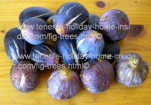 Fig fruit of carica ficus