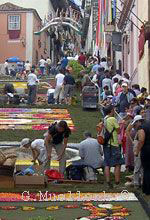 Orotava flower carpets on steep hill