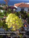 Flower paradise cottage la Romantica by Puerto de la Cruz Tenerife Spain