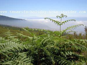 Typical Tenerife fog altitude 1200-1600 meters