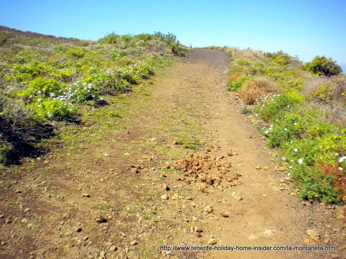 Horse trail with horse manure