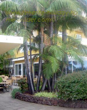 Hotel Tigaiga of 4 stars opposite the Taoro Sortija park near Alberto Bar Puerto de la Cruz.