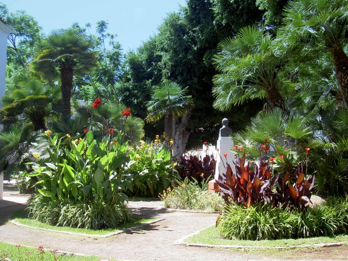 Icod botanical garden on Plaza Lorenzo Caceres