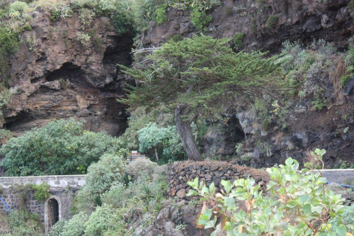 Juniper tree natural landmark by Mirador Humboldt.