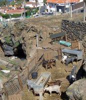 Keeping goats by luxury Tenerife Villas Spain