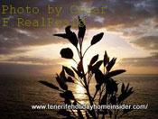 La Gomera sundown with poetic touch