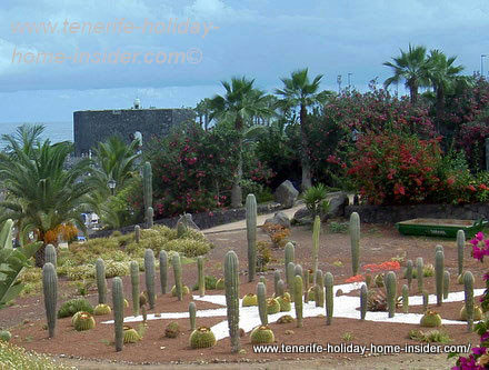 Cactus garden Tenerife destroyed, but preserved by landscaping ...