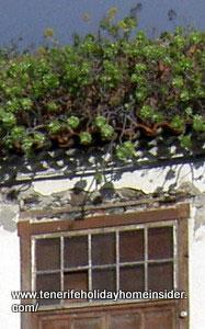Living roof or green roof in Tenerife Realejos Spain