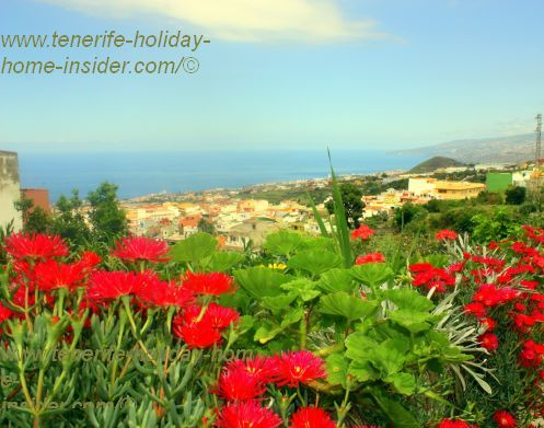 Beautiful Los Realejos Alto El Horno Mocan with flowers and views to the ocean as well as La Montaneta del Fraile.