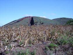 Burned crops