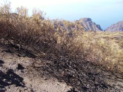 Masca burned land
