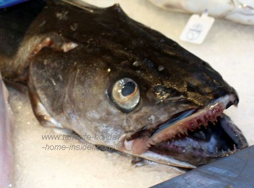 Merluza Hake species from Cadiz in Spain with its awesome top and bottom teeth showing.