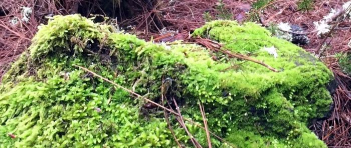 Mossy stone in different shades of brilliant green.