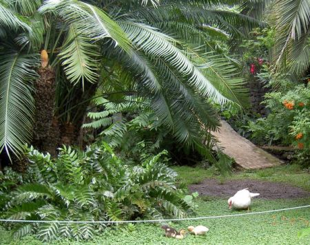 Parque Risco Belo baby ducks
