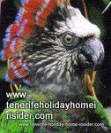 Parrot foundation symbol by hawk head parrot  Puerto de la Cruz