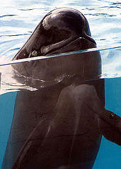 Pilot whale friendly