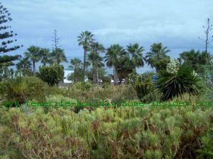 Playa Jardin Park Puerto de la Cruz Tenerife
