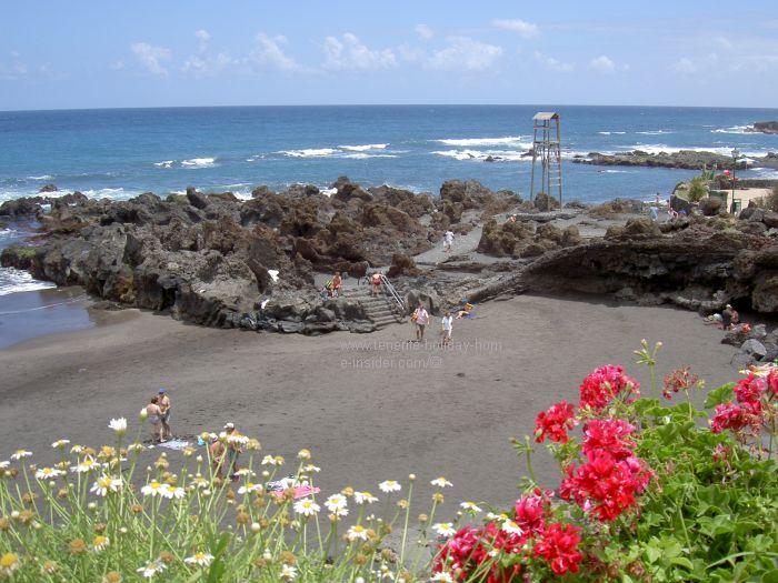 Playa Punta Brava flowers by the beach.