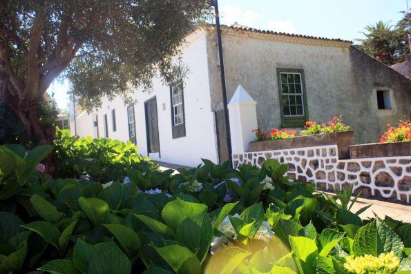 Plaza Iglesia de Catalina Hydrangeas