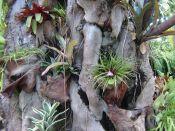 Puerto Cruz Botanic Gardens tilandsias