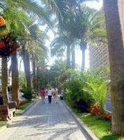 Avenue called Rambla Puerto Cruz Tenerife