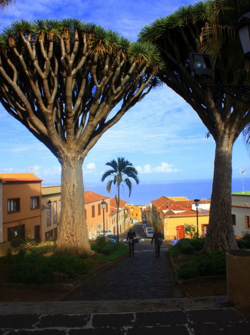 Realejo Bajo with its two twin Dragon trees on a platform of Iglesia de la Concepión above the picturesque street Cantillo Abajo and the ocean on the horizon