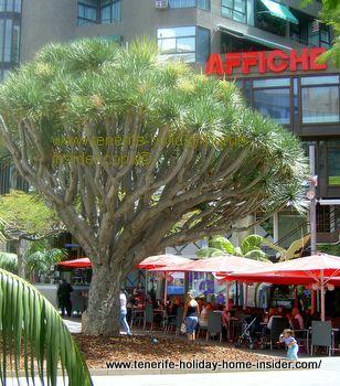 Restaurante El Aguila C/Valentin Sanz Plaza Alfarez Provisionales Santa Cruz