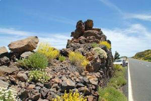 Natural rockery with wild daisies of Teide