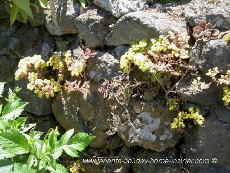 Rock flowers endemic of important government farm